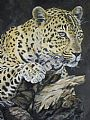 wildlife art paintings