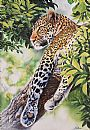 Kuhanya - leopard in tree by Stephane Alsac&nbsp(2)