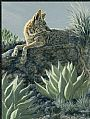 The Rustle - Coyote and Huachuca agaves by Kim Duffek&nbsp(2)