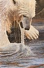 Ice Water - Polar Bear by Joyce Trygg (2)