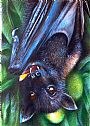 Black Fruit Bat - Fruit bat by Rebecca Koller&nbsp(2)
