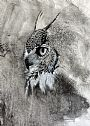 Thoughts - Great Horned Owl by Linda Harrison-Parsons&nbsp(2)