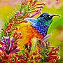 Jewel of the Savannah - African Orange Breasted Sunbird by Whitney  Kurlan&nbsp(2)