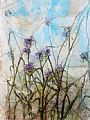 Widow's Tears (Spiderwort) -  by Katherine Weber (2)