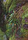 Green Grotto, Frontenac Arch - Close up plein air painting of ferns, moss, and lichens on a granite cliff face by Aleta Karstad&nbsp(2)