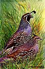 Quail Couple - California Quail by Linda Parkinson&nbsp(2)
