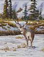 Buck Lookin' Back - Mule Deer by Kitty Whitehouse&nbsp(2)