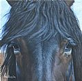 Equine/Western - Nature Art by Marti Millington