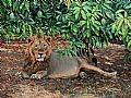 Indian Wildlife - Nature Art by Chirag Thumbar