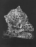 Other Wildlife - Nature Art by Mel Dobson