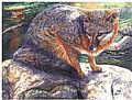 Open Edition Prints - Nature Art by Linda Parkinson