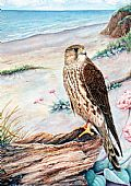 Birds ( Birds of Prey) - Nature Art by Linda Parkinson